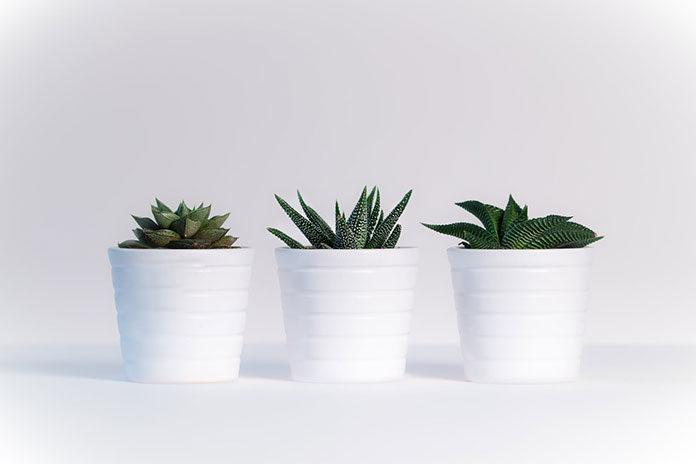 Neutralizacja zapachu podczas domowych upraw roślin
