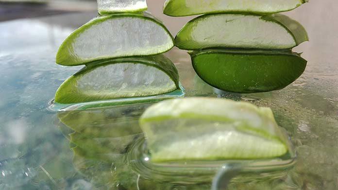 Roślina wiecznej młodości, czyli dlaczego warto stosować aloes do pielęgnacji ciała?